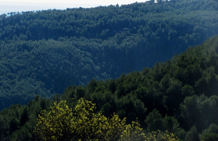 Valleys covered with Aleppo pine.